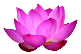 Blooming like the lotus flower in the leadership philanthropy the lotus is an ancient symbol of fortune and one of the few flowers that blooms in seemingly worthless muddy water in many ways beatriz likens the mightylinksfo